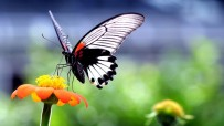 preview_beautiful-butterfly-on-orange-flower