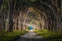 highest-path