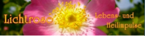 Lichtrose